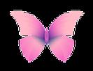 butterfly-trans_final